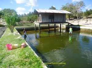 Integrated Fish Farming System