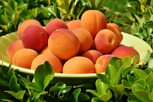 grow apricot fruit