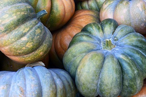 Curing, Growing Gourds