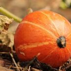 Growing and Harvesting Squash